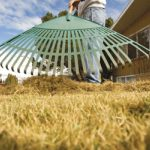5 Winter St. Charles Lawn Care Tips