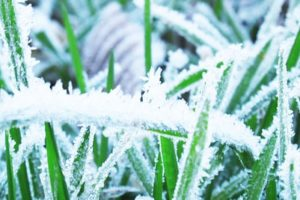 St. Charles Lawn Care tips for winter
